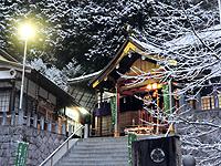 楓樹【冬】