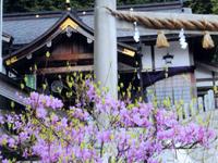 楓樹【春】